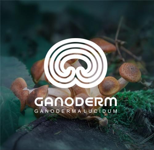 طراحی لوگوی شرکت گانودرم